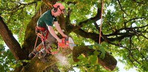 Арбористика, спил, обрезка деревьев